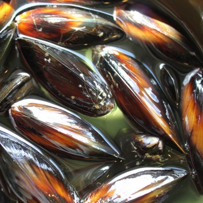 Mussels for Paella
