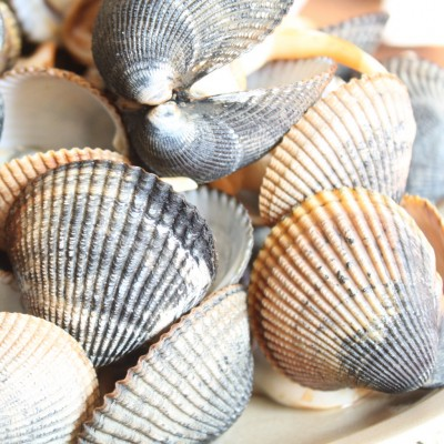 Butter Clams